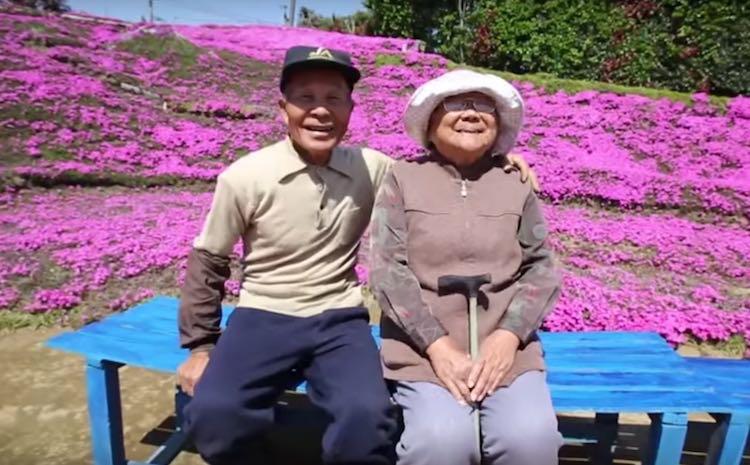 Japanese Couple screenshot Asahi Shimbun - Marido passou anos plantando milhares de flores para sua esposa cega