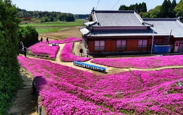 jardin2 700x440 1 - Marido passou anos plantando milhares de flores para sua esposa cega